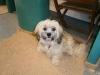 jessie-the-dog